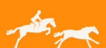 Pferde, fohlen und ponys